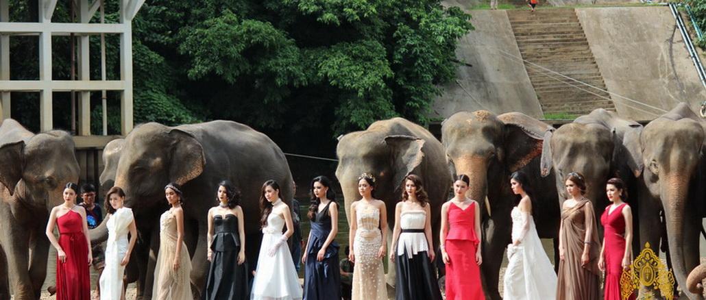 เดอะจังเกิ้ล สาวไทยกับช้างไทย
